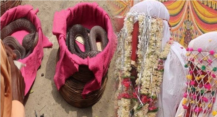 The gift of 21 poisonous snakes to the bridegroom on the wedding night 1