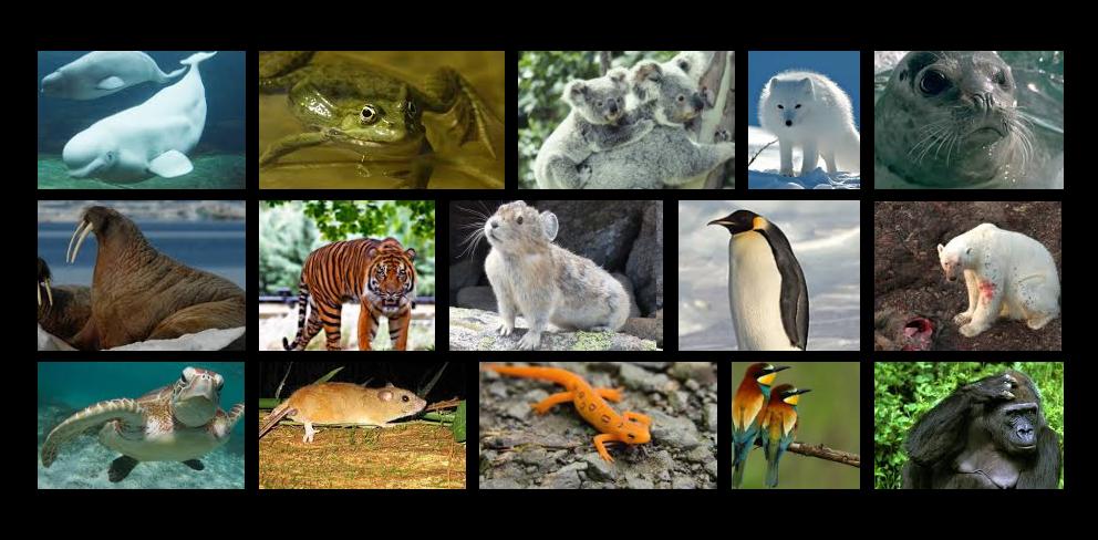 Top 10 Extinct Animals Found Alive In 2020